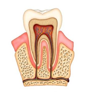 Shawnessy Smiles   South Calgary Dentist   Root Canal